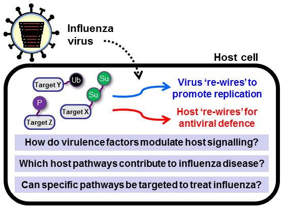 Host virus